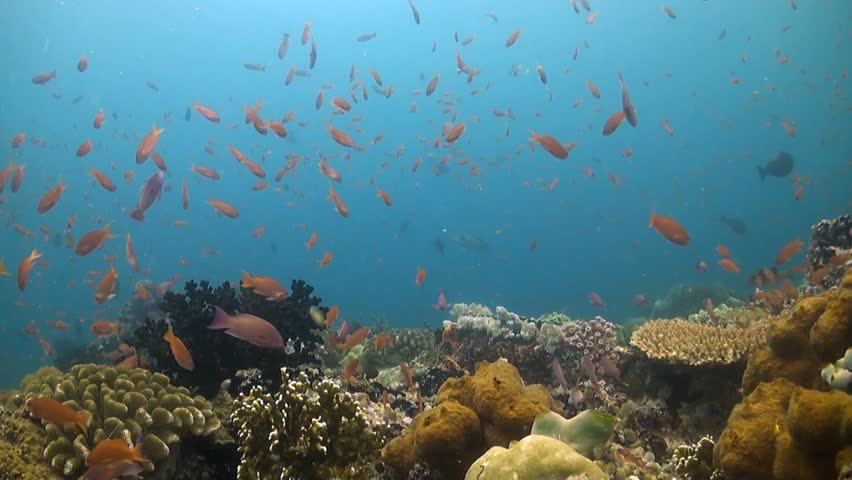 Tropical colorful rich underwater coral reef fish corals sun and coral reef in philippines with plenty fish verde island puerto galera hd stock publicscrutiny Images