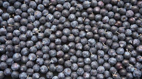 Sloe,Prunus spinosa - blackthorn in rotation