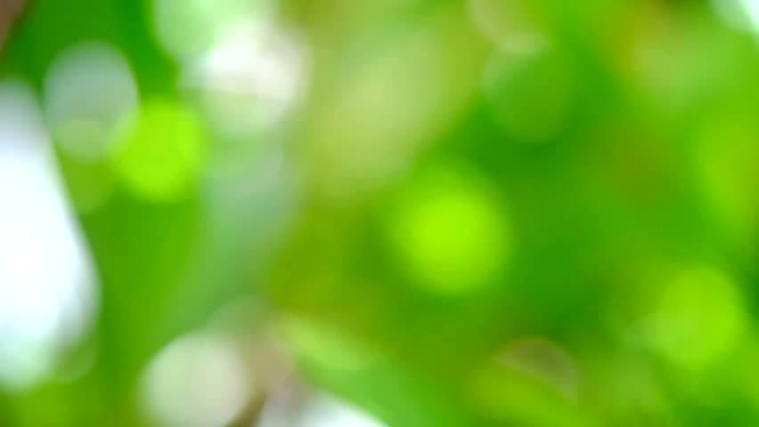 Abstract Green Leaves And Bokeh Stock Footage Video 100 Royalty Free 11709956 Shutterstock