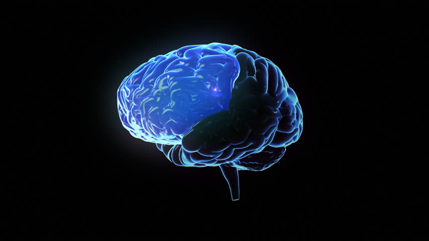 Spinning human brain with regions lighting up and electrical impulses flashing. Synapses. Loopable. Biology. Blue. More color options in my portfolio.
