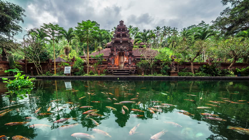 4K Timelapse. Fish pond on the background of the temple. 15 July 2015, Bali, Indonesia | Shutterstock HD Video #11732717