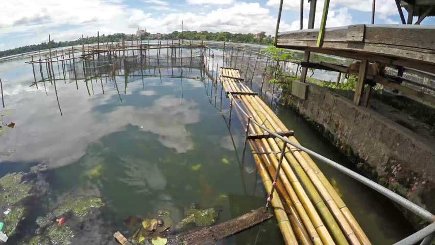 Aeration process of waste sewage water treatment plant for Koi pond quezon city