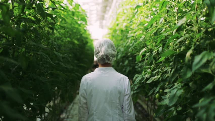 Biotechnology woman engineer examining plant leaf for disease in greenhouse | Shutterstock HD Video #11899046