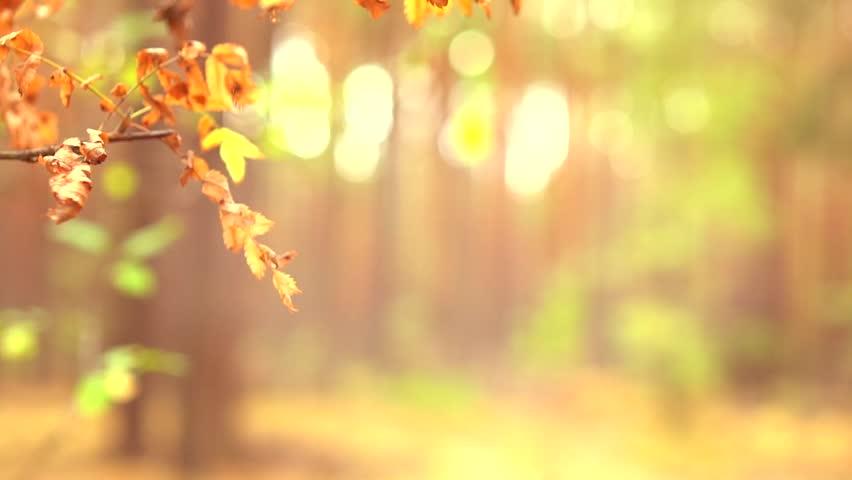 Beautiful Sunny Nature