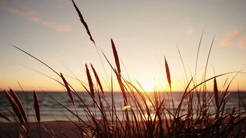 The wind stirs the grass on the background of a beautiful sunset. Sunset on the Baltic Sea. Klaipeda. Lithuania.