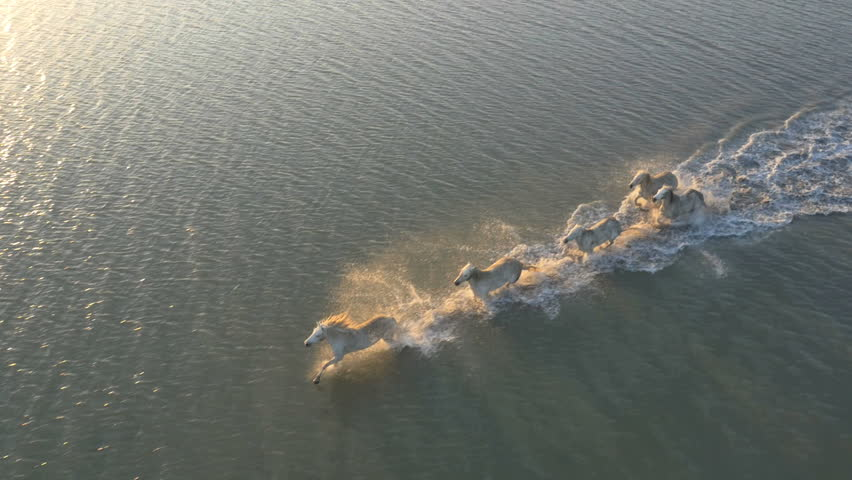 Aerial France Camargue sunset horses animal wild breed sea freedom business marshland tourism outdoor insurance travel