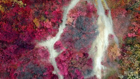 Aerial: top view of colorful autumn forest. Drone moves up.