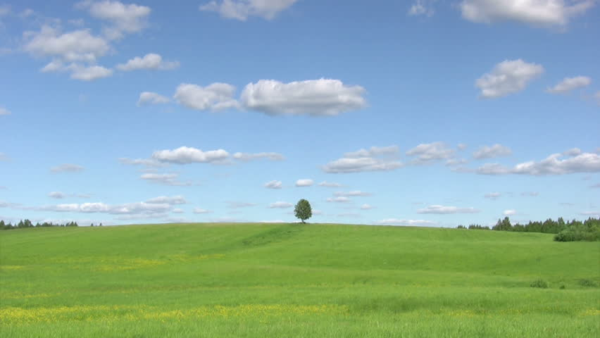Lonely tree on green meadow against  blue sky background
