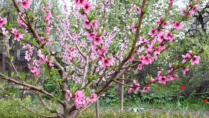lower peach tree guys Powder coating guys is the business to call for all of your powder coating in lower peach tree, wyoming needs if you are planning a task regarding powder coating in lower peach tree, al, there are many reasons to consider powder coating guys.