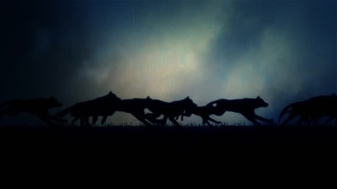 A Large Pack of Wolves Running on a Dark Stormy Night