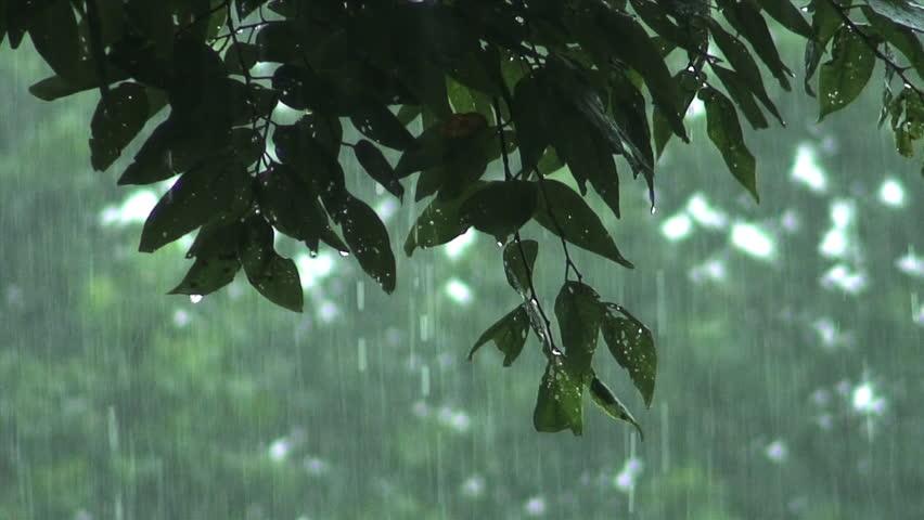Falling Rain ...