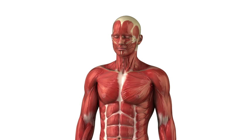 Head Muscular System Anatomy Zoom Stock Footage Video 100 Royalty