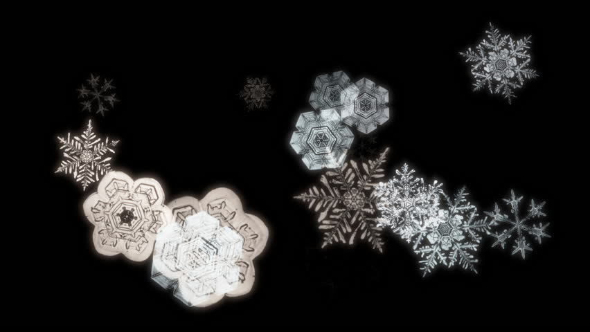 snowflakes falling against a black backdrop hd stock footage a snowflake animation with flakes falling