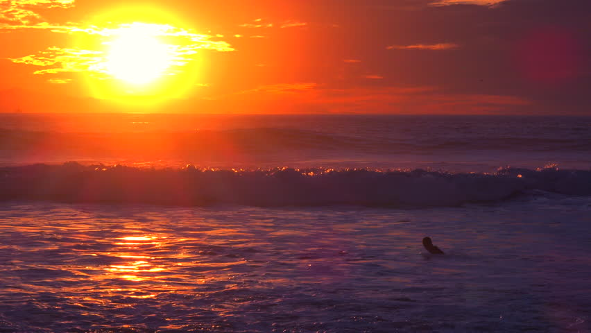 Dolphins Swim In Sea At Sunset With Bright Evening Sun And Yellow