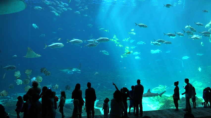 ATLANTA, GEORGIA - CIRCA 2015 - Visitors are silhouetted against a huge underwater tank filled with fish, sharks and manta rays at an aquarium. | Shutterstock HD Video #12950786