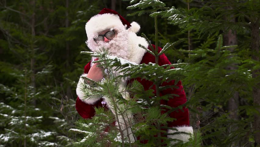 Santa Claus near spruce in forest