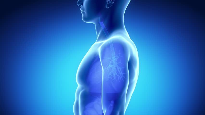 Stock Video Of Male Larynx Anatomy In Blue 1300174 Shutterstock