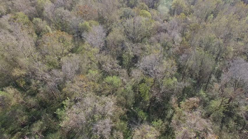 Aerial of Louisiana Bayou Swampland.