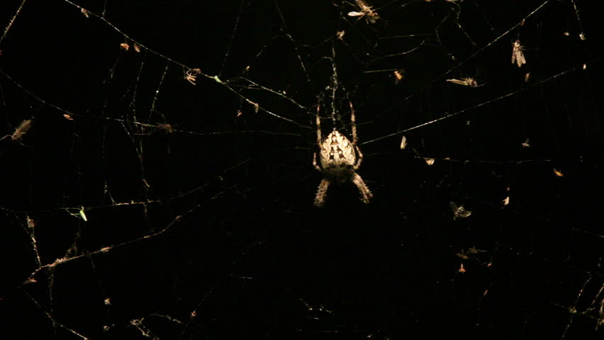 Night spider on the web. | Shutterstock HD Video #1322086