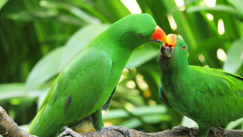 Bird Of Tropical Rainforest Large Green Parrot With Orange