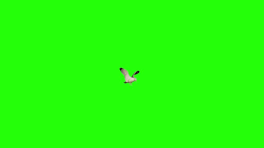 Ultra slow motion of a sea gull landing in the middle of frame and flying away. Shot 100 fps with red dragon camera. Version 2