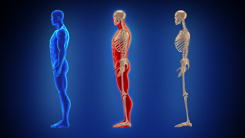 Three Skeletons Waiting For Something Anything Stock Footage Video