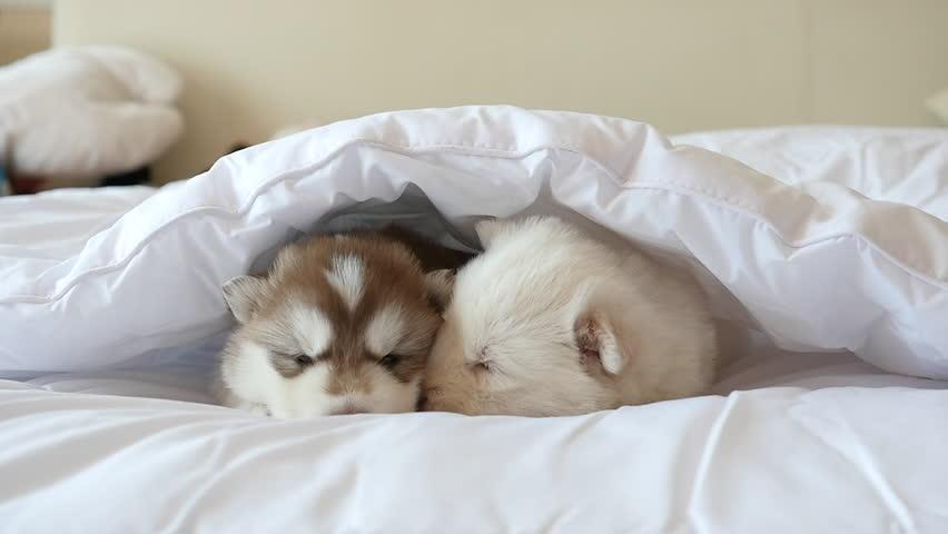 Couple sleeping under blanket for