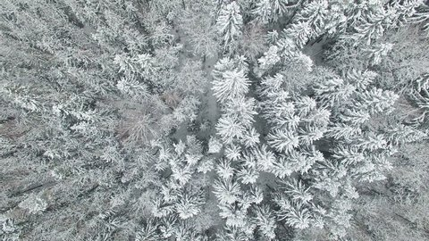 4K. Flight above winter forest on the north, aerial top view.