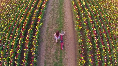 Aerial, overhead view of girl walking with a vintage bicycle in a field of tulip flowers in bloom