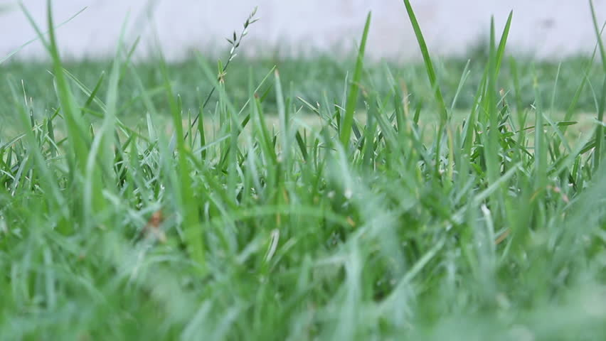 Low angle HD footage of a grass lawn being mowed with a gas powered lawn mower.
