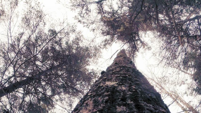 Impressive POV Footage of a Tree Falling down during Winter