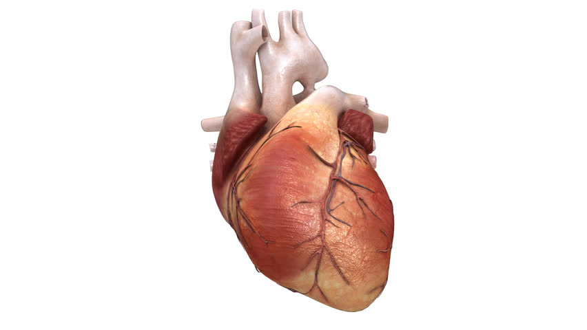 3D Render of a beating human heart