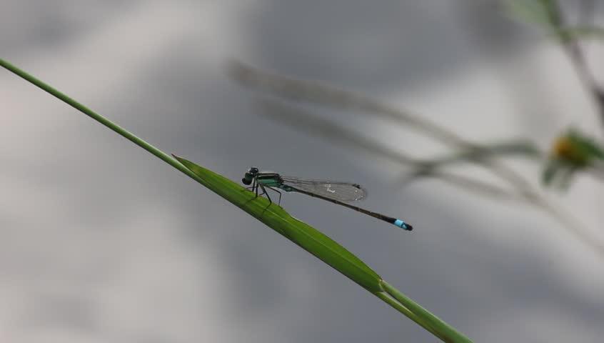 Dragonfly | Shutterstock HD Video #1427386