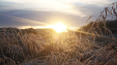 Sunset scene in arctic Iceland with grass