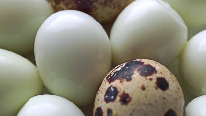 osmosis in quails egg Remove shell of raw quail egg by soaking it in hydrochloric acid or vinegar for a day rinse it and place it in various set-up to demonstrate diffusion and osmosis.