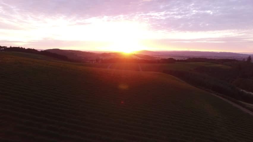 Aerial view of vineyard, Willamette Valley Oregon   Shutterstock HD Video #14489236