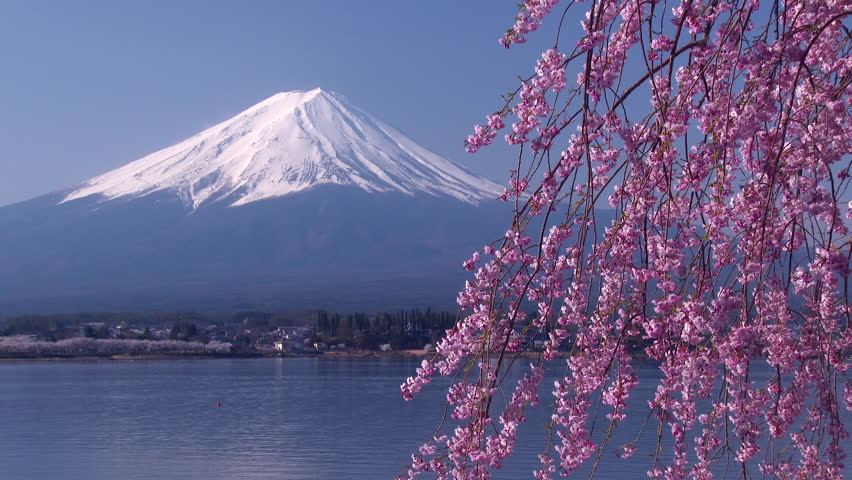 Mt.Fuji with Beautiful Cherry Blossom , Japan