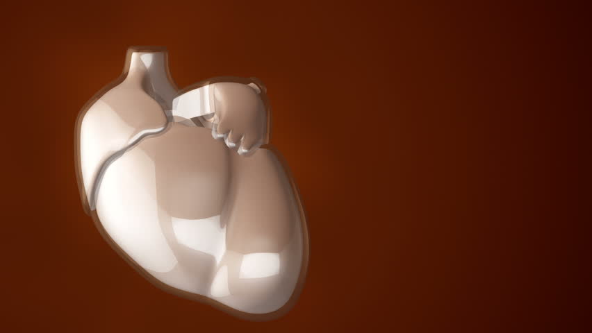 Animation of rotation human heart with glass safety. Movie of health care or science. Animation of seamless loop. | Shutterstock HD Video #14965246