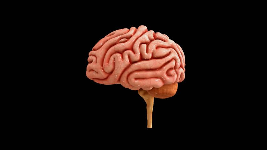 Human Brain Stock Footage Video 15111580 Shutterstock
