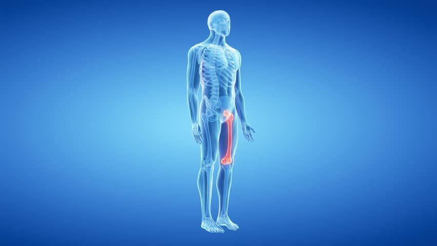 Medical 3d animation of the femur bone | Shutterstock HD Video #15128986