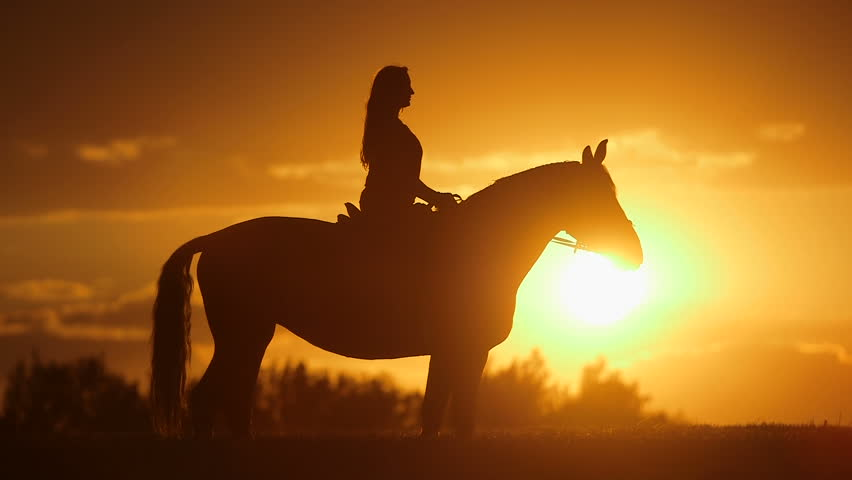 Panning shot of silhouette woman with horse on field. Side view of female is practicing horseback riding during sunset. She is enjoying nature with domestic animal.