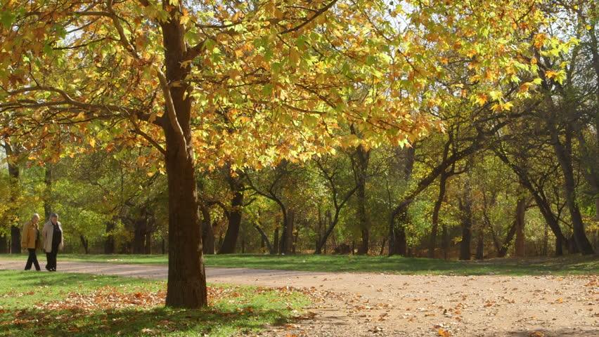 Path Autumn Park Stock Photo 220343416 - Shutterstock