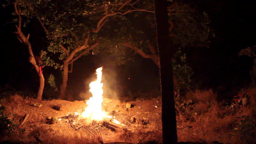 bright fire in forest #1517536