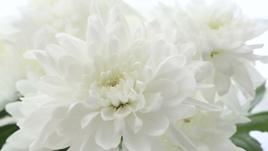 Beautiful Bouquet White Chrysanthemums On Background Frame Size Varies