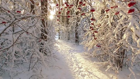 Path through Siberian winter forest under the snow