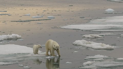 Slow motion - medium of polar bear mum and and cub floating around on a chunk of sea ice with reflection in the calm water - A014 C053 071893 001 E