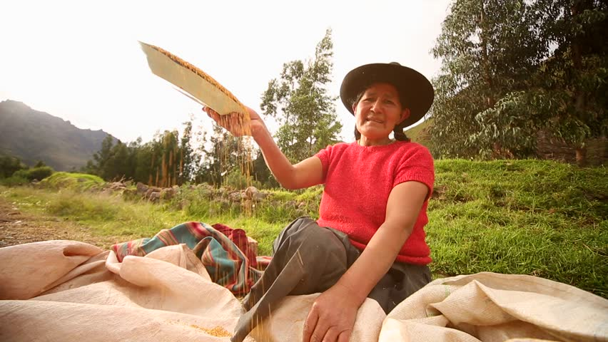 Video footage of a farmer woman in Peru that works with seeds of Quinoa. April 2014 near Cusco, Peru