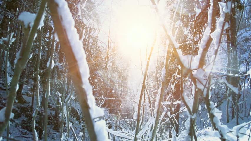 winter snow landscape scenery. nature season background