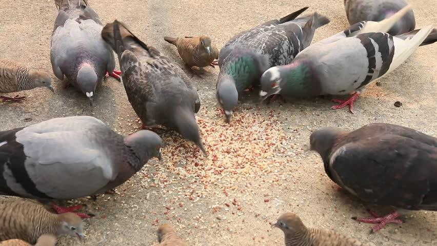 Birds eating   Shutterstock HD Video #15494836