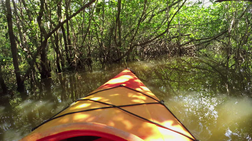 CLOSE UP: Kayaking through mangrove trees jungle in calm river canal in sunny summer | Shutterstock HD Video #15497698